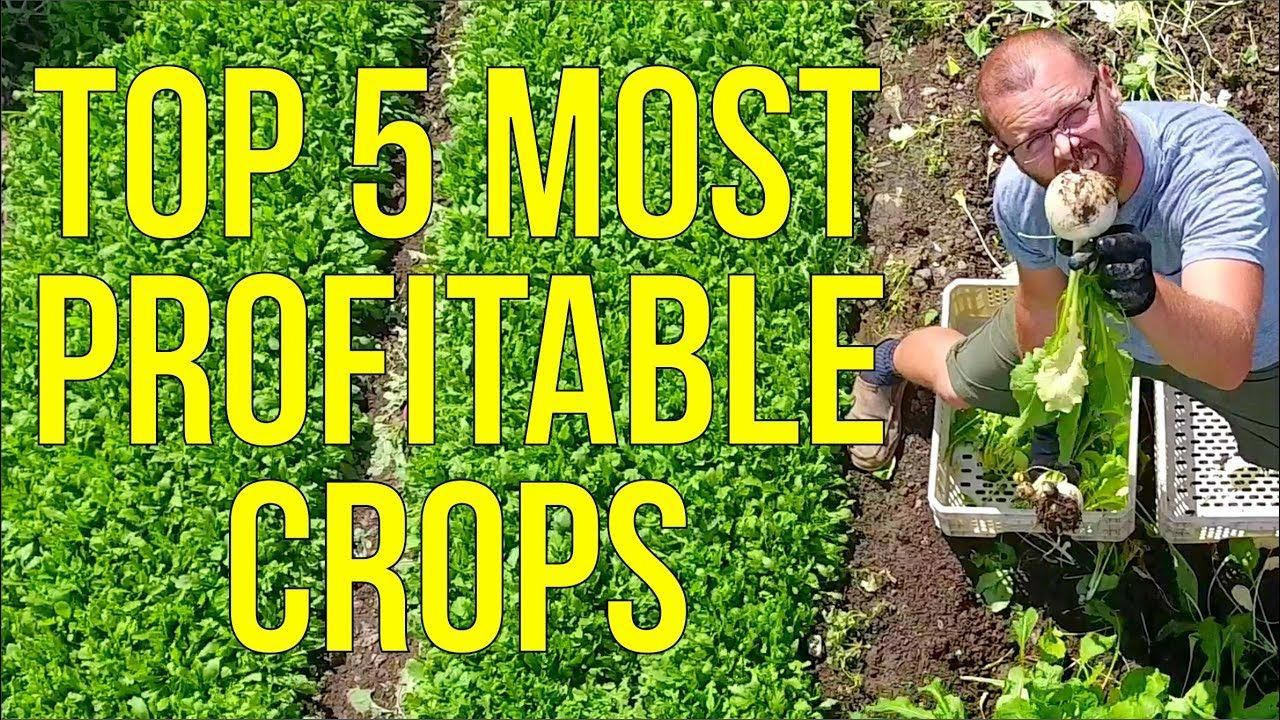 The 5 Most Profitable Crops I've Ever Grown