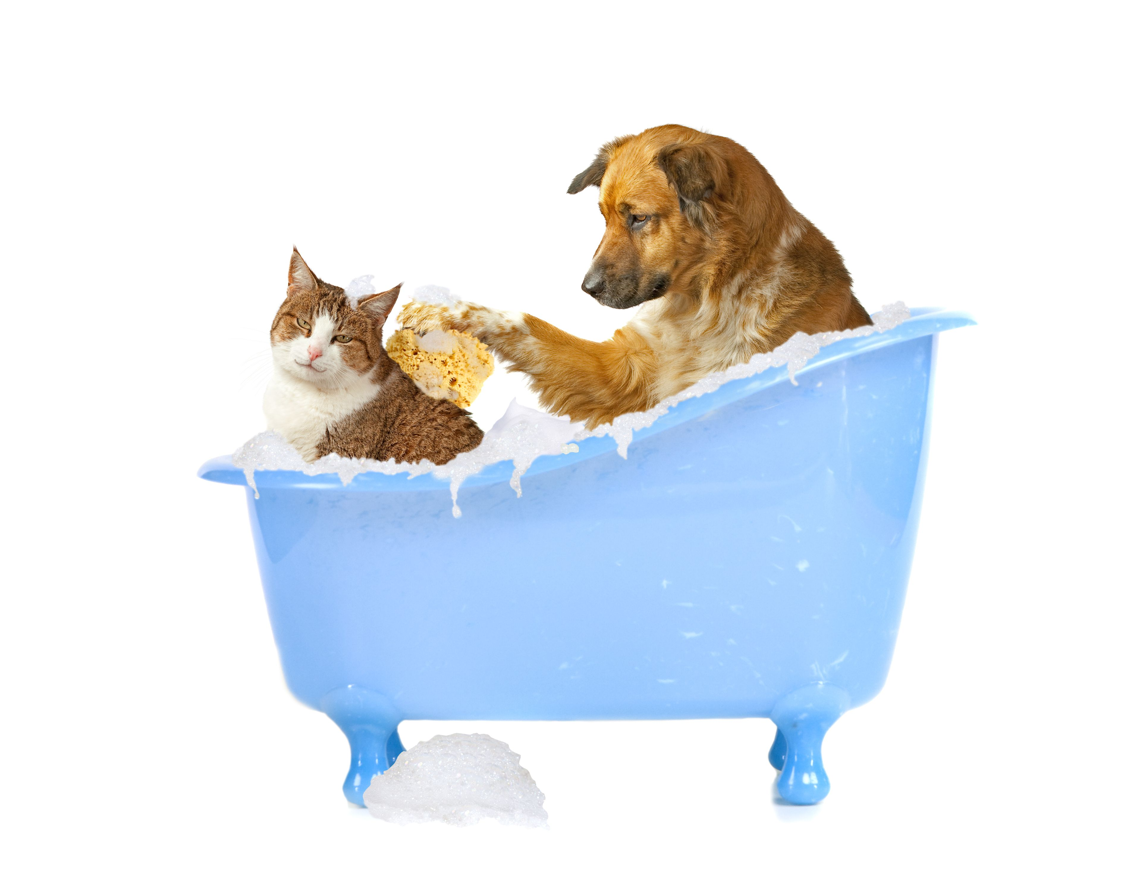 Dog Bathing Cat Cat Wash Dog Cat Pictures Funny Cats And Dogs