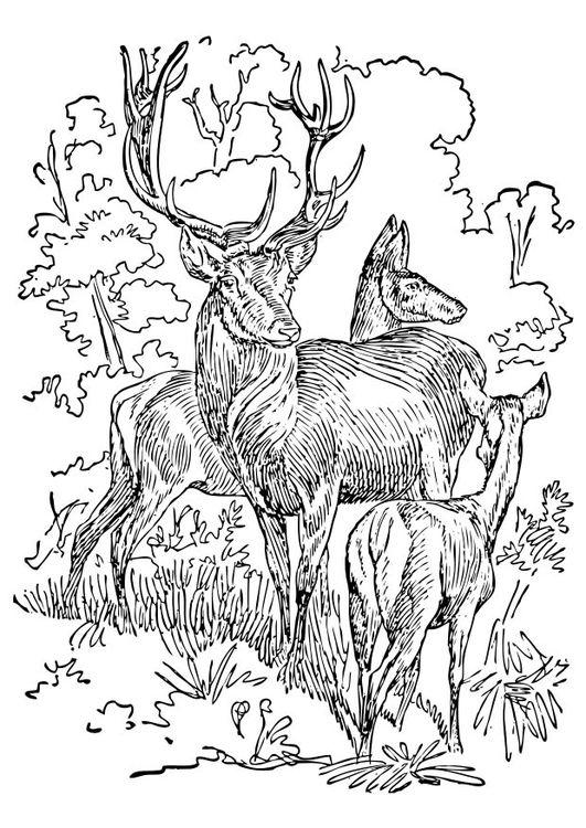 Malvorlage Hirsch und Reh Ausmalbild 17395 Deer
