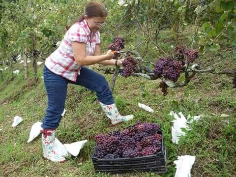La vendimia con Lorena la dueña de la viña