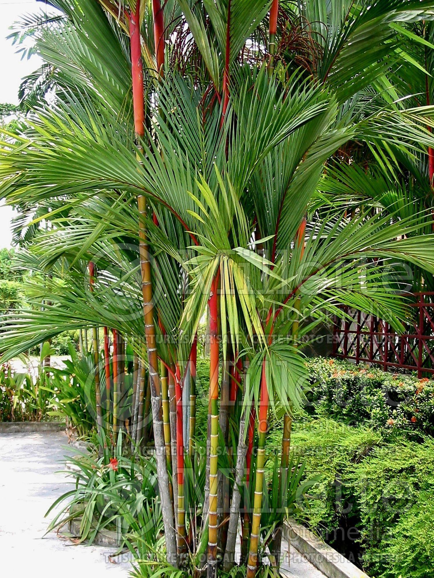 Amenagement Jardin Avec Une Touche D Exotisme 50 Photos Amenagement Jardin Avec Palmier Amenagement Jardin Et Jardin Balinais