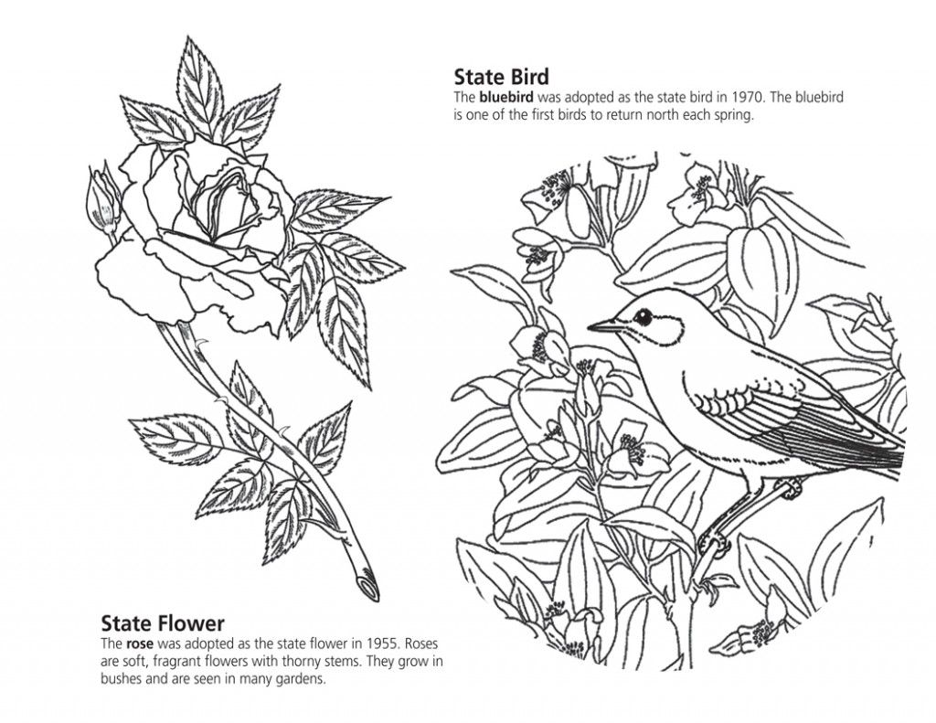 Coloring Books Pages Picture Nys Symbols Coloring Book