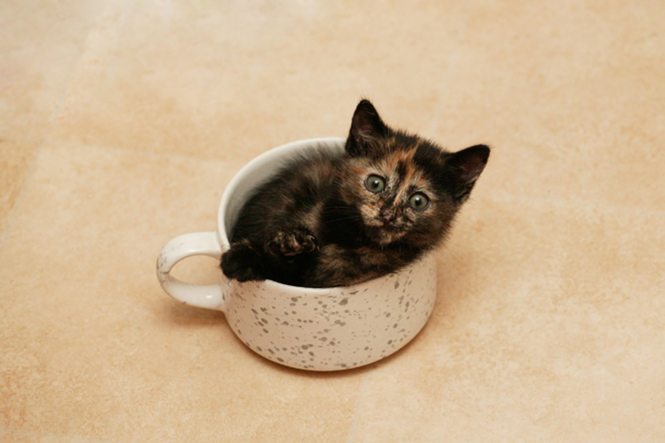 Boo In A Cup Cats Kittens Cutest Cat Pics