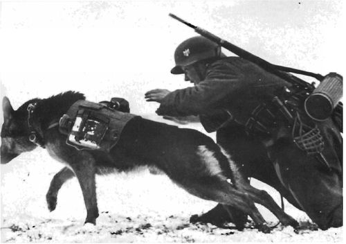 Dogs were frequently used as message carriers by the german ground forces, the message being contained in a small metal cylinder attached to the dog collar, also strapped toa small harness is a mess tin and a water bottle.