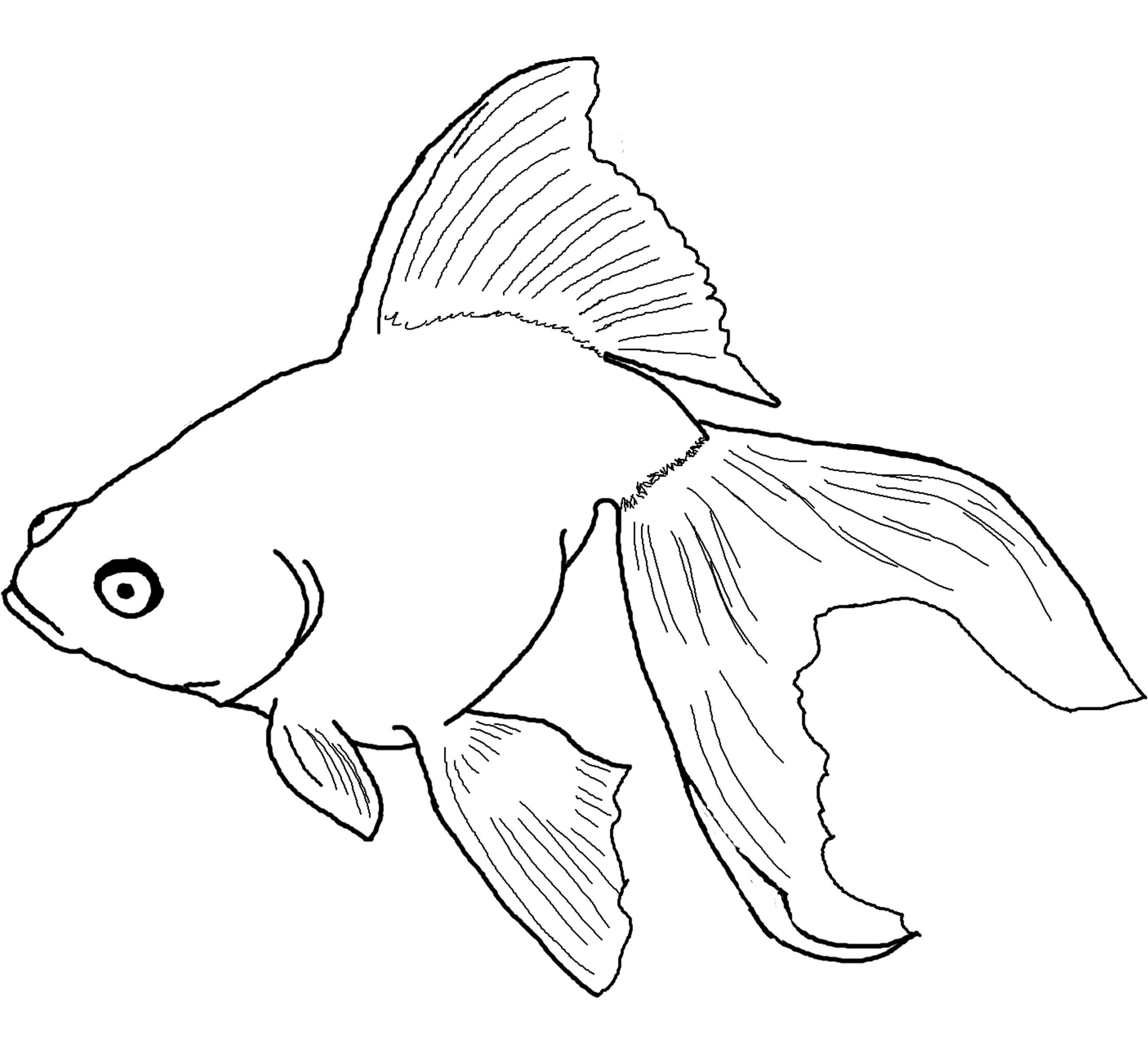 Printable coloring pages koi fish - Fish Coloring Pages Angel Fish Coloring Page