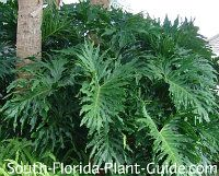 Low maintenance landscaping for south florida florida for Low maintenance tropical plants