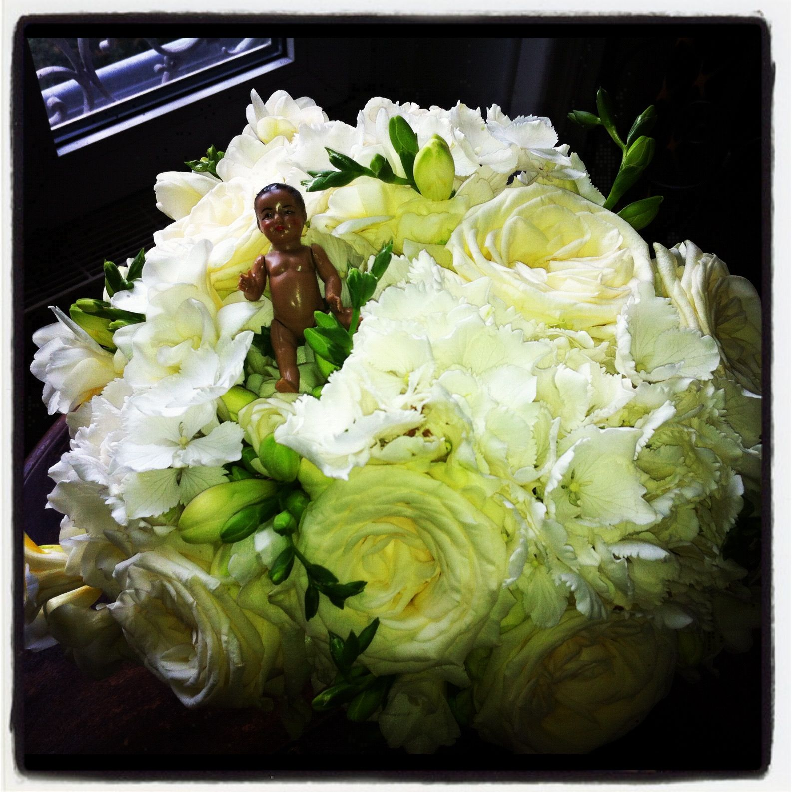 Hello dolly ! Here I am, surrouding by classie flowers ! All white but me ;-)