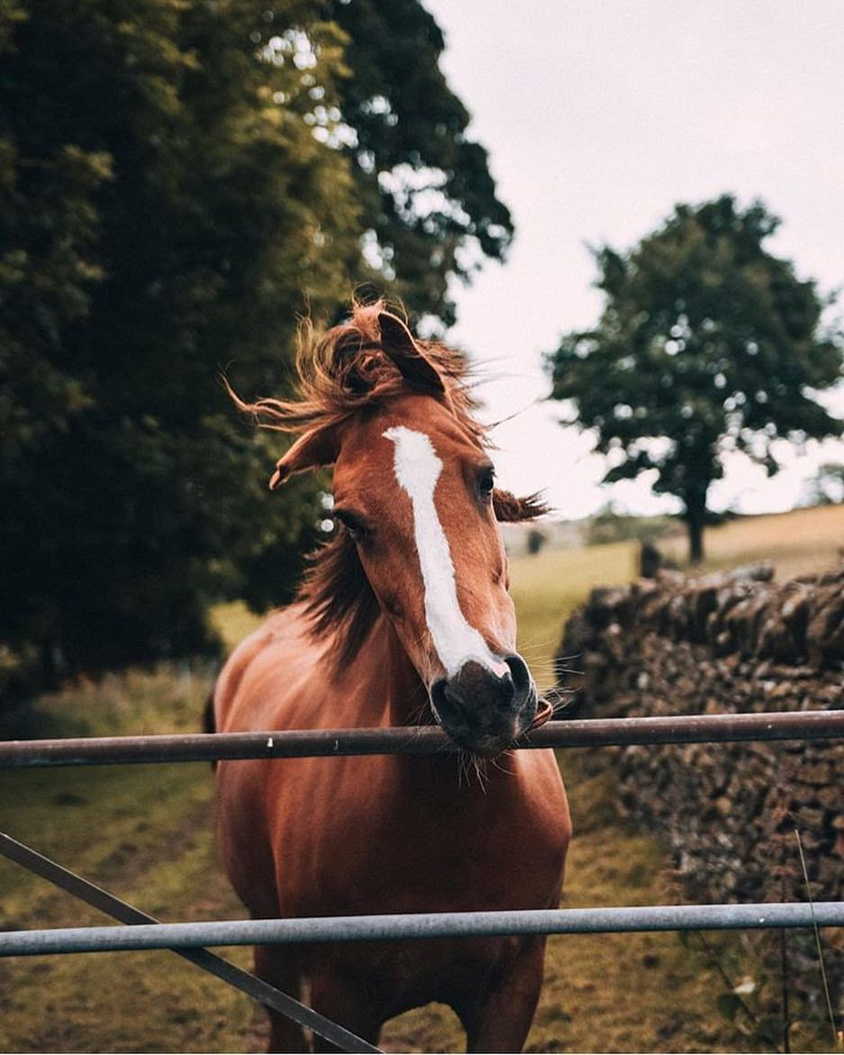 How Long Do Horses Live and Everything about Horse Age (FACT ...