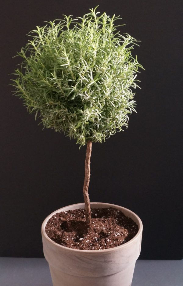Potted Topiary Tips That Maximize Greenery