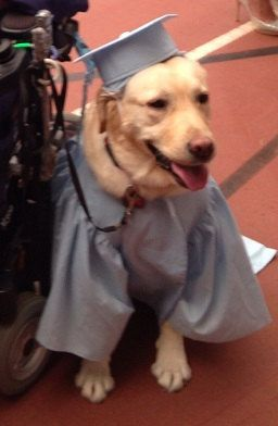 For Large Dogs Graduation Cap And Gown For By Woofsandruffles