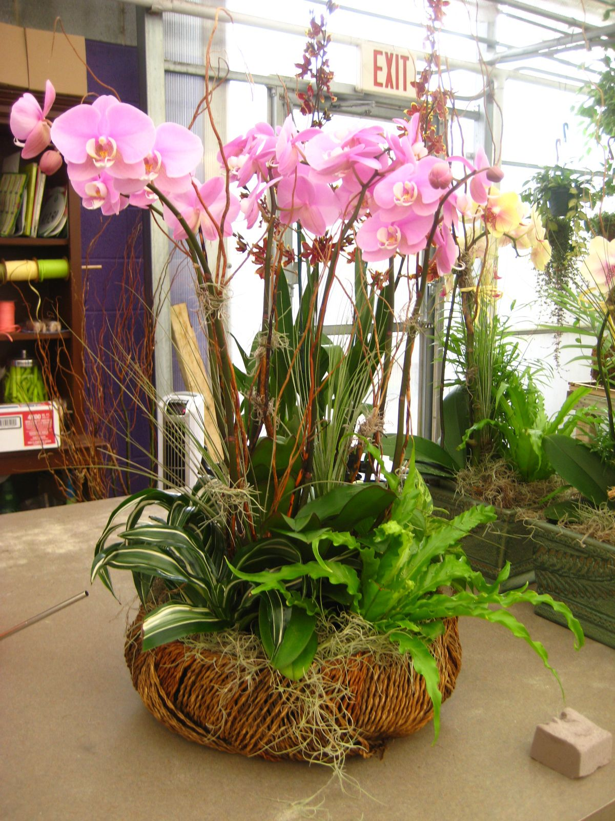 What A Gorgeous Orchid Display