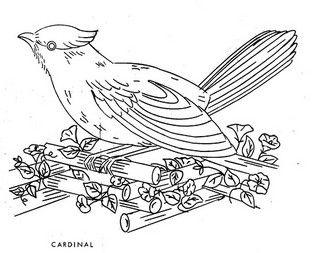Bird - Cardinal   Flickr - Photo Sharing!