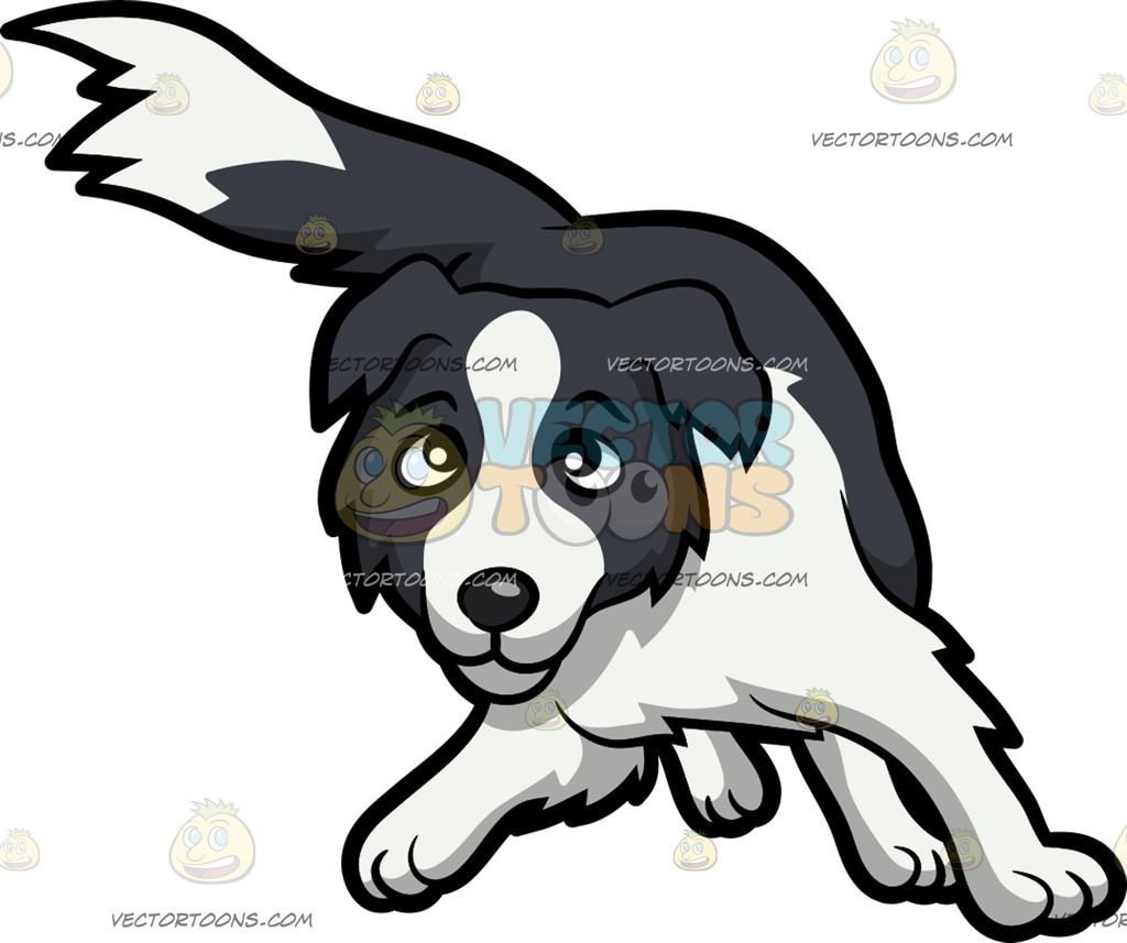 A playful border collie puppy border collie puppies collie a playful border collie puppy nvjuhfo Choice Image