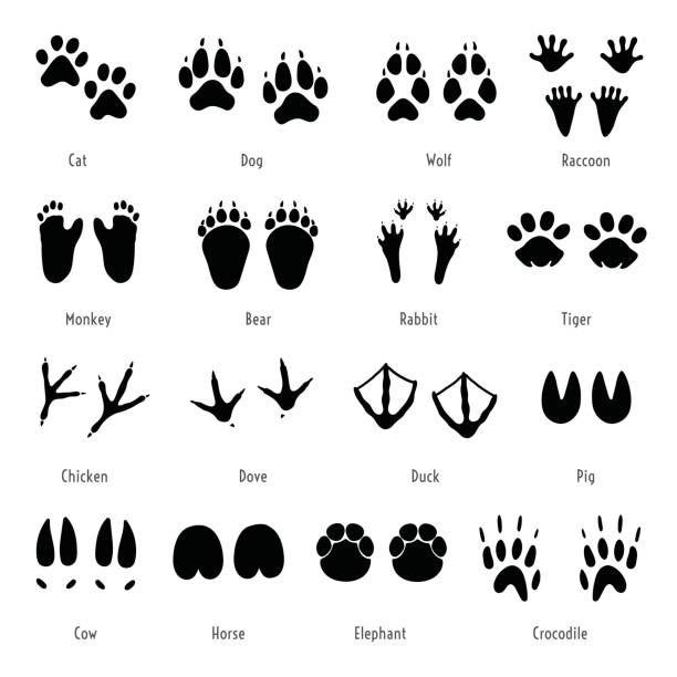 Royalty Free Animal Tracks Clip Art Vector Images Illustrations Istock Animal Silhouette Animal Footprints Animals