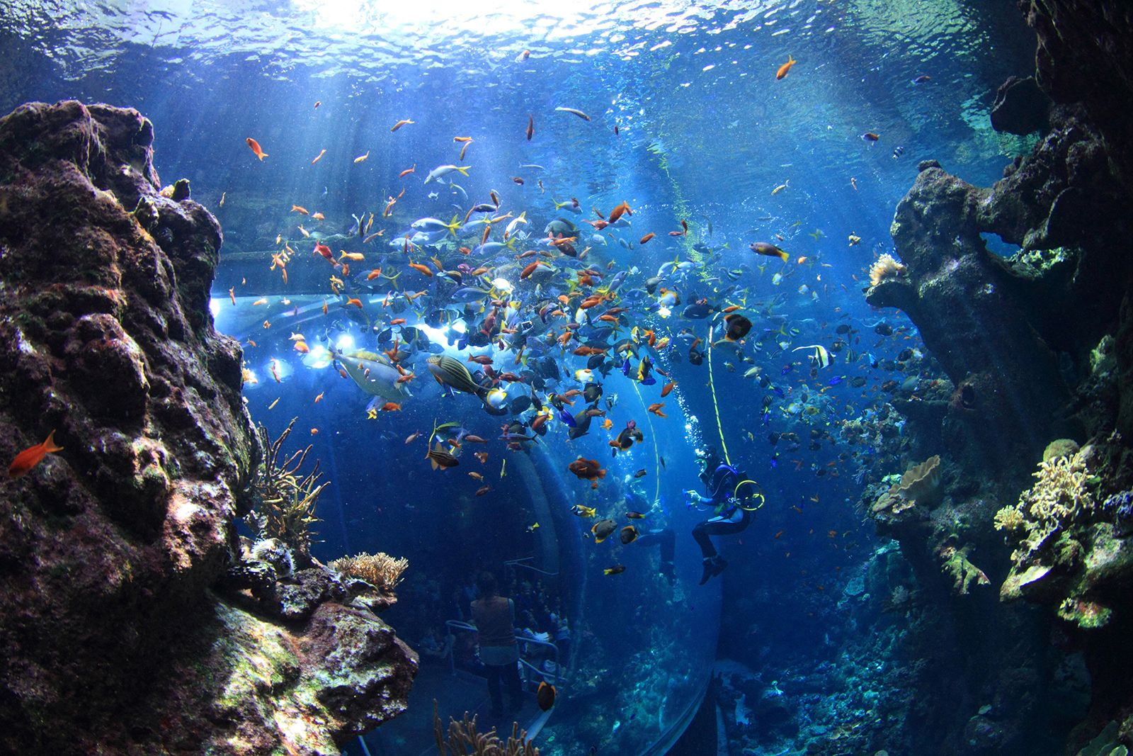 The Best Aquariums in California (With images) | San ...