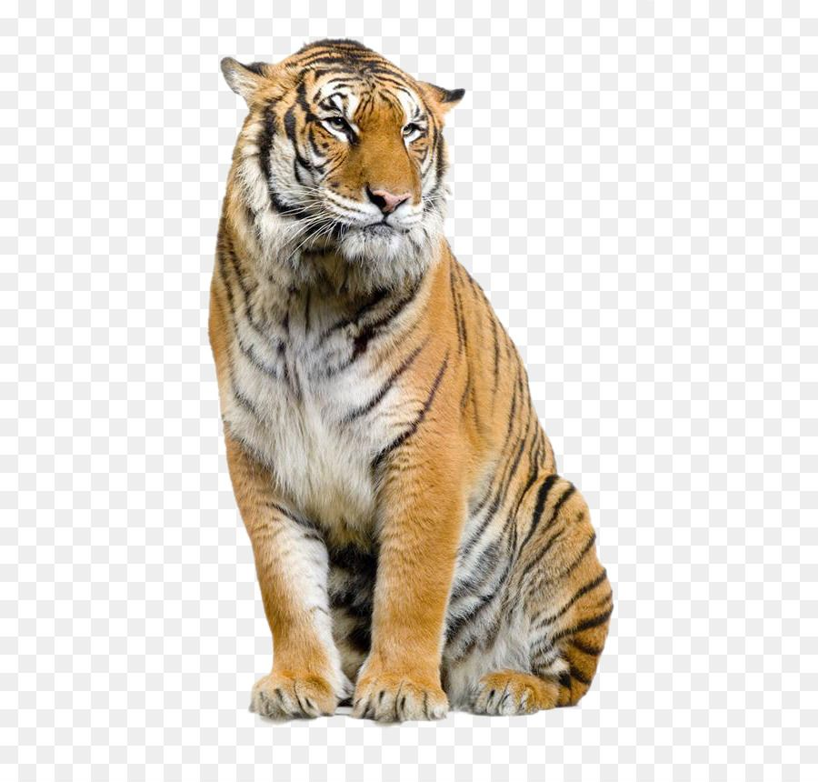 Pin By Swapnil Chandrakant On Tiger Png File Tiger Lion Clipart Safari Animals Birthday