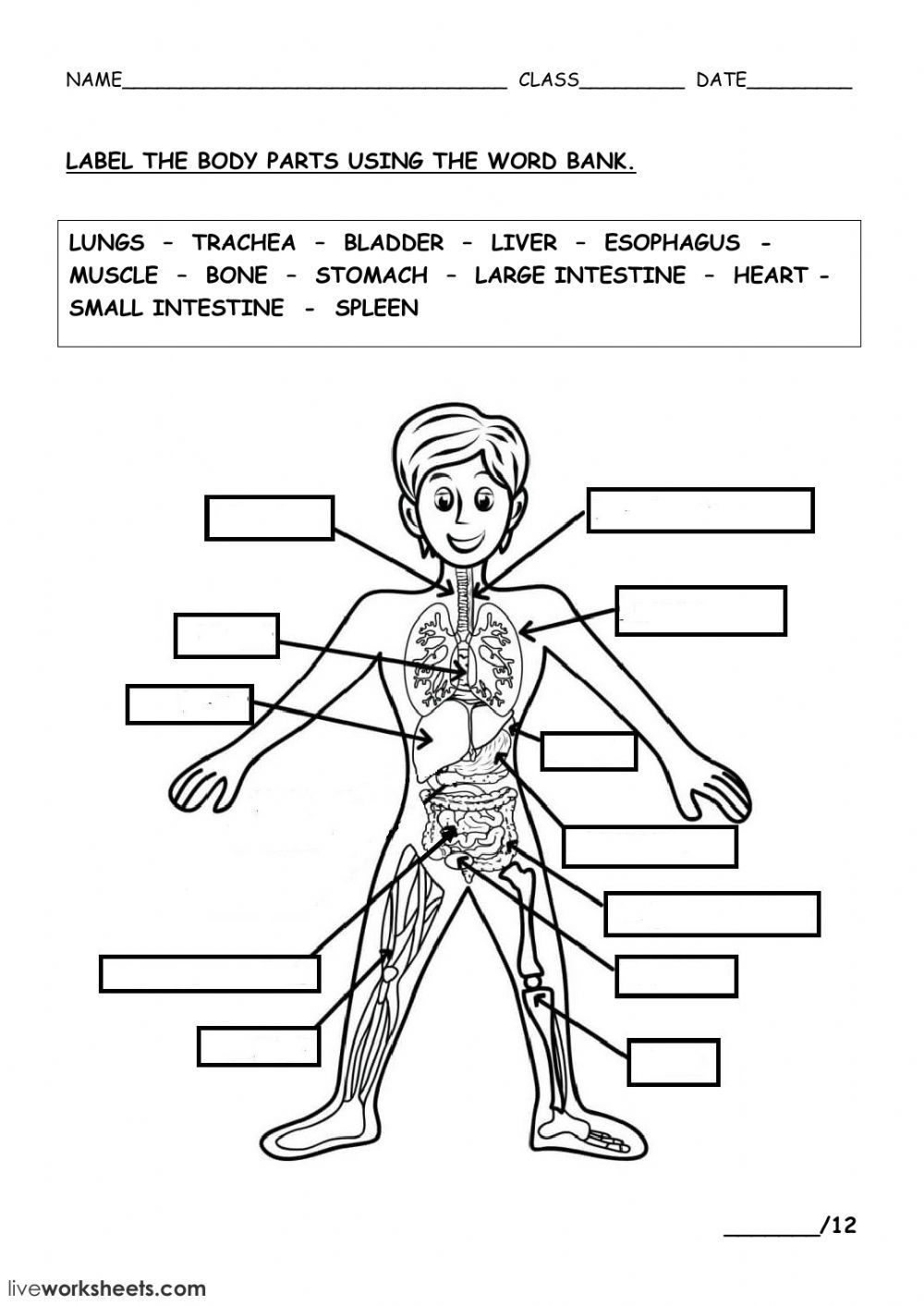 THE HUMAN BODY   Interactive worksheet   Body systems ...