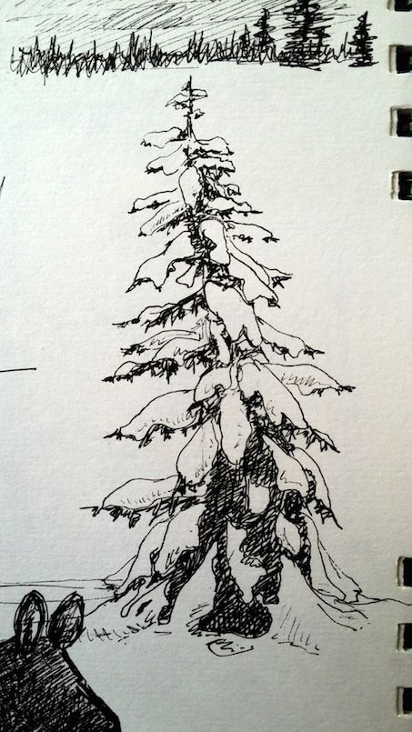 Snow Covered Tree | Tree drawing, Snow covered trees
