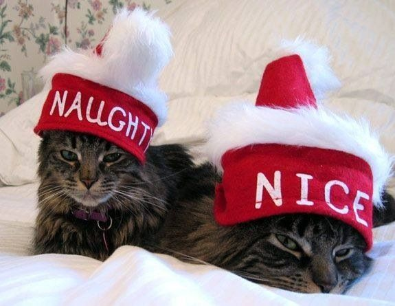 ❤️kitties❤️ For more Christmas cats, visit http://Facebook.com/funholidaycats