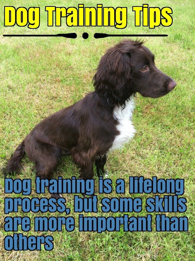 Respectable Dogs And Training Please Follow Effective Dog