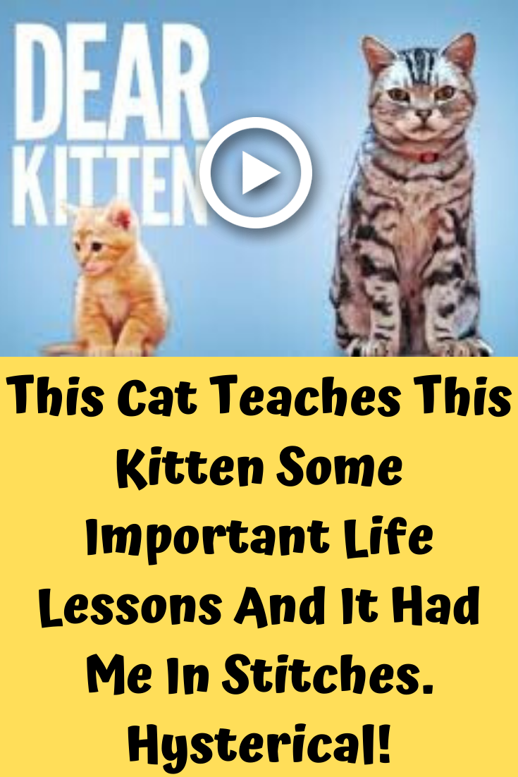 This Cat Teaches This Kitten Some Important Life Lessons And It Had Me In Stitches Hysterical Kitten Cats Important Life Lessons