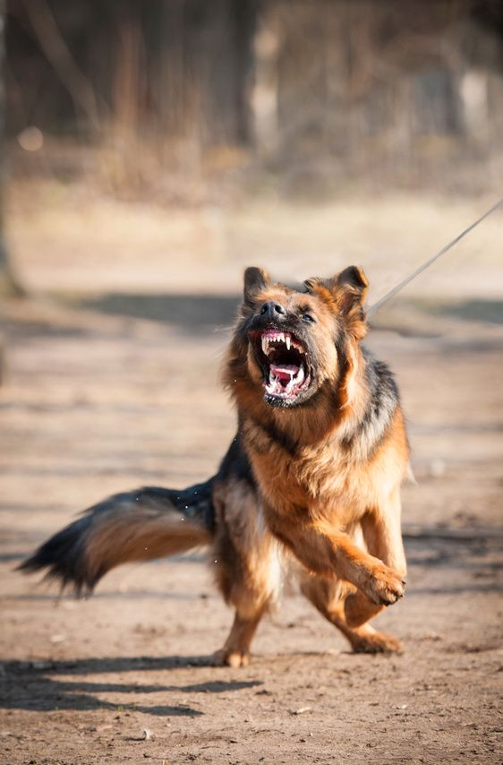 How To Overcome Dog Aggression Without Hitting Your Dog Dog