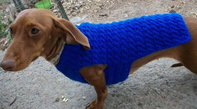 Dachshund and Small Dog Crochet Sweater by copperllamastudio, $3.00 #dogcrochetedsweaters