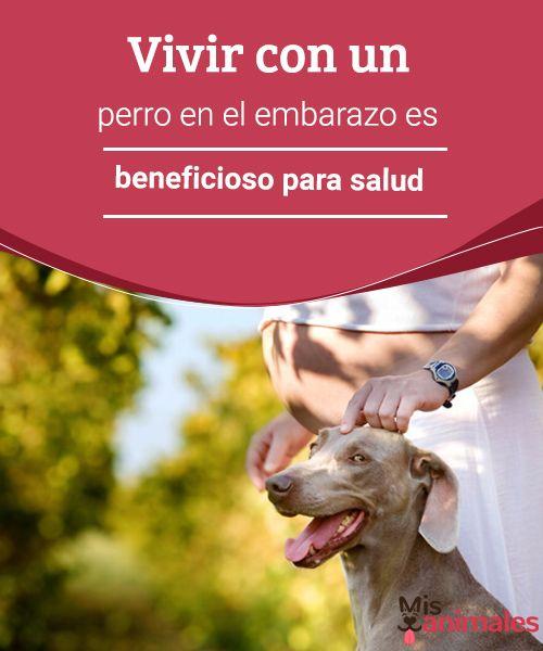 Vivir con un perro en el embarazo es beneficioso para salud  Estoy embarazada y tengo una mascota, ¿qué hago? Nuestro consejo: no hagas nada y disfruta de tu mascota en el embarazo porque mejorará tu salud. #salud #beneficios #mascota #embarazo