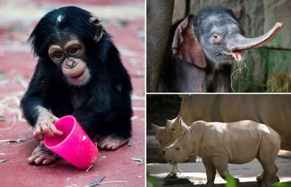 Zoo babies of 2016 - AP Photo/Sebastian Konopka; REUTERS/Hannibal Hanschke; AP Photo/Wong Maye-E