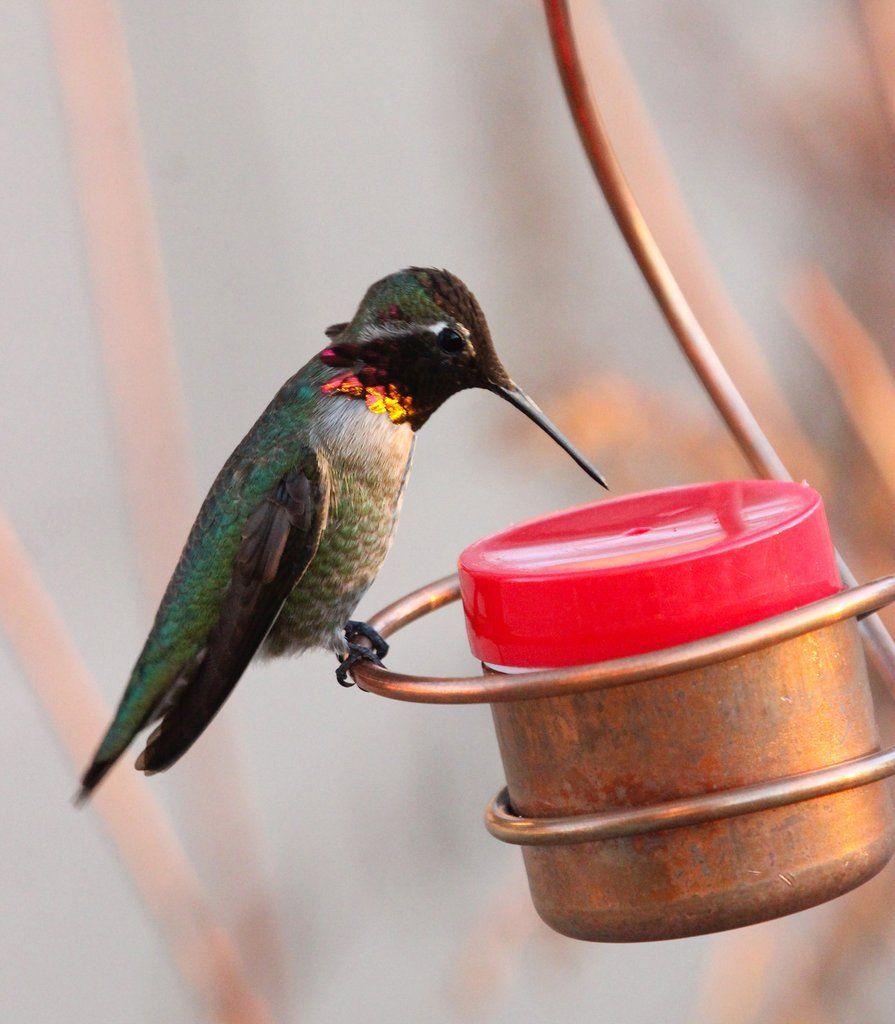 Best Bee & Wasp Proof Copper Hummingbirds Feeder Humming