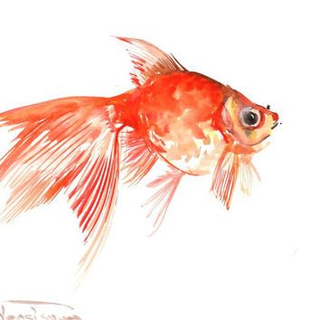 Watercolor Fish Paintings Goldfish Original Watercolor Painting
