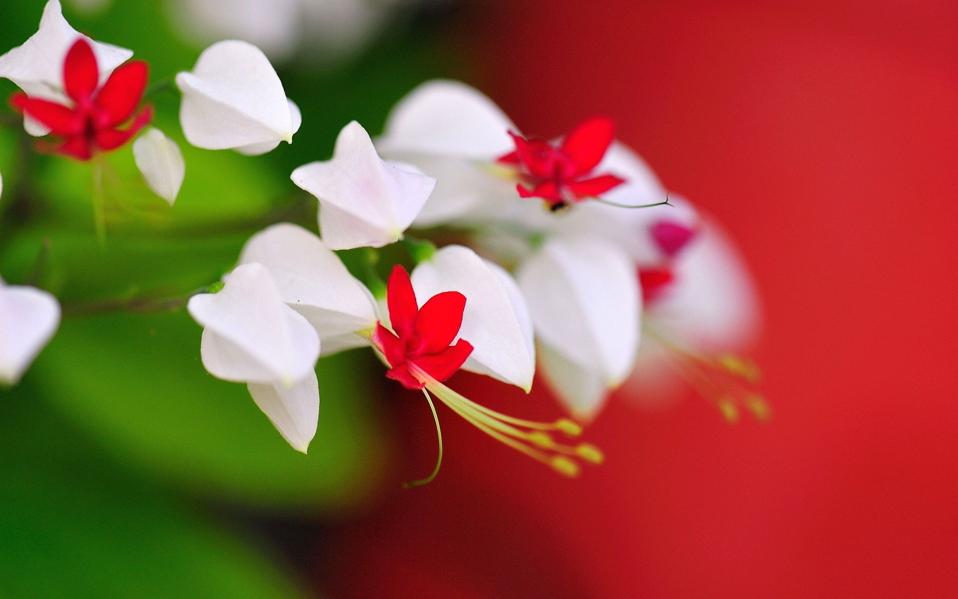 100 types of the most beautiful white flowers for your garden 100 types of the most beautiful white flowers for your garden dhlflorist Images