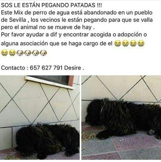 Pin De Arki En Adopta Go Vegan Perros De Agua Y Perros