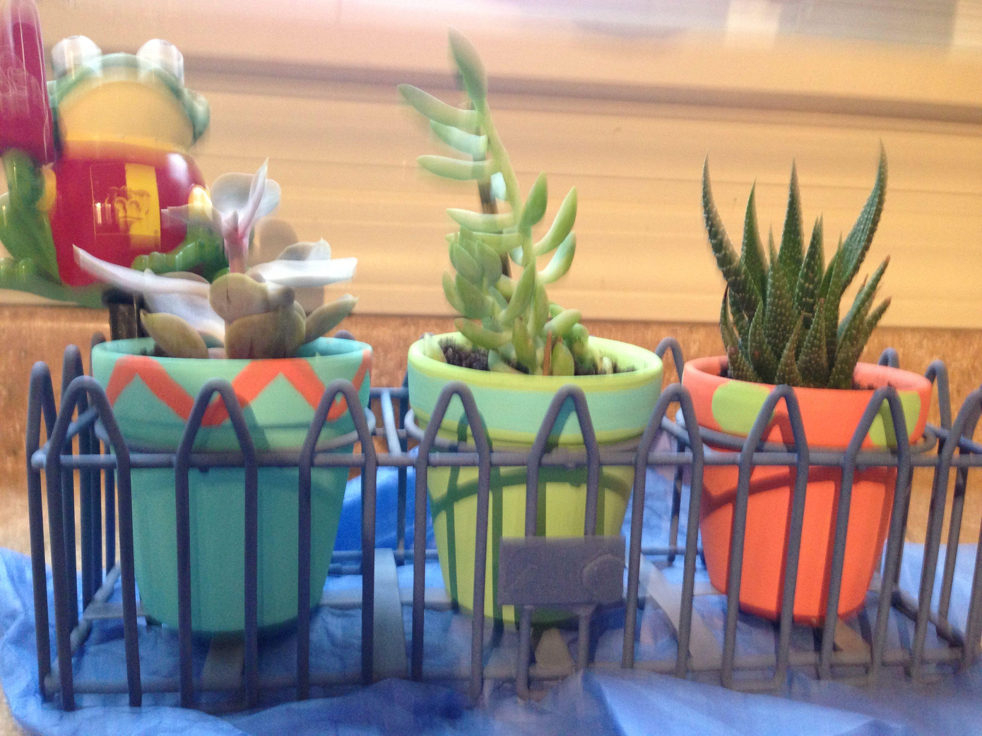 Succulents in clay pots