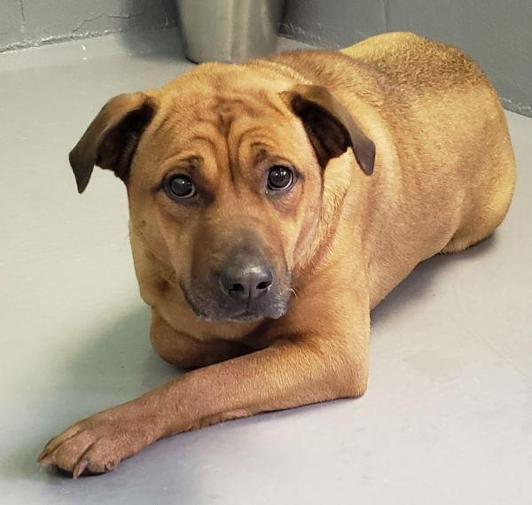 Dogs For Adoption Petfinder With Images Dog Adoption Dog Finder Dog Pounds