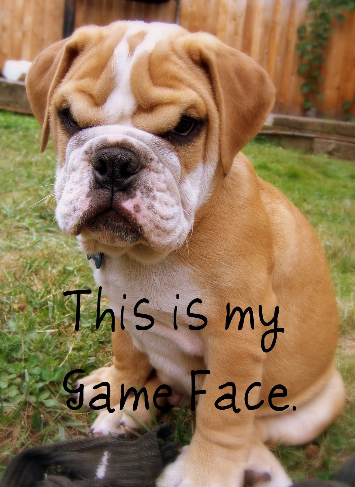 This is my game face.......... Tuesday quotes funny