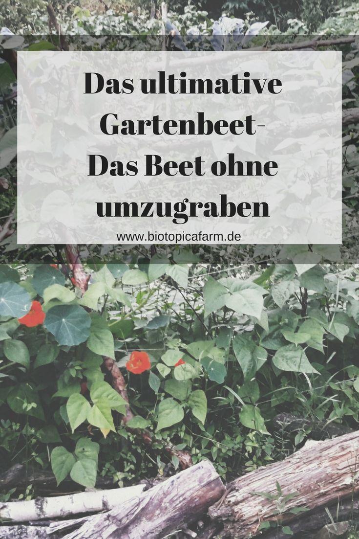Das Ultimative Gartenbeet Ohne Umzugraben Gartenbeet Garten Gemuseanbau In Kubeln