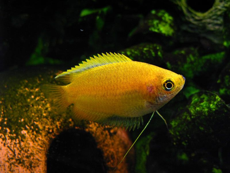Pin On Assorted Tropical Exotic Fish