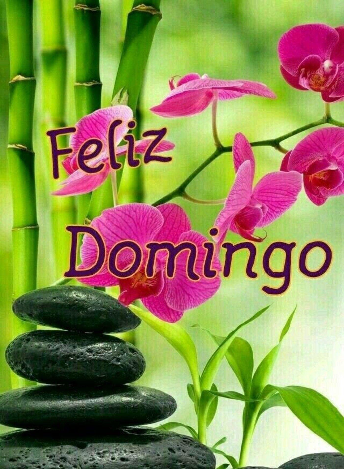 Com flores Feliz Domingo Bom Dia 76 | Bom dia com flores, Domingo ...