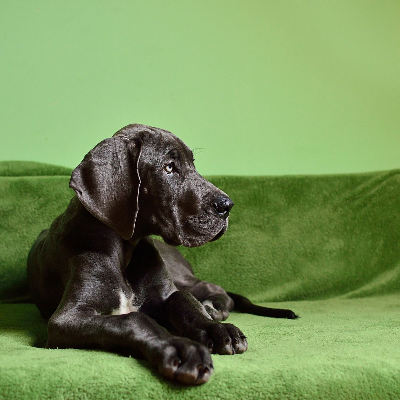 The Top 7 Hotel Chains For Traveling With Your Dog Large Dog
