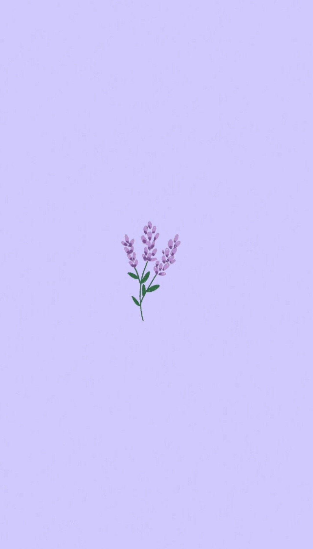 Lavender 🌂