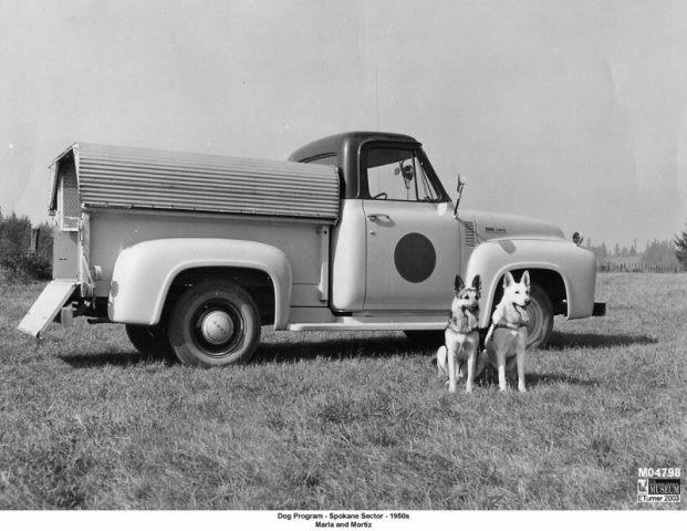 Vintage Border Patrol vehicle with dogs Old police cars