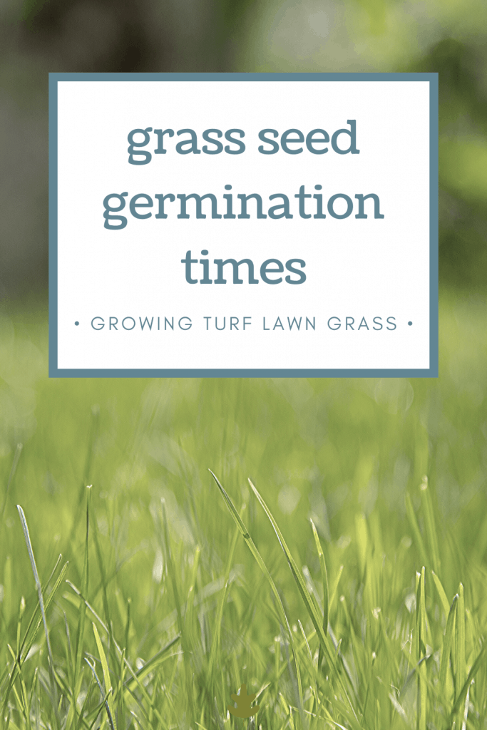 How Long Does It Take For Grass Seed To Germinate Grass Seed Types Grass For Shady Areas Zoysia Grass Seed