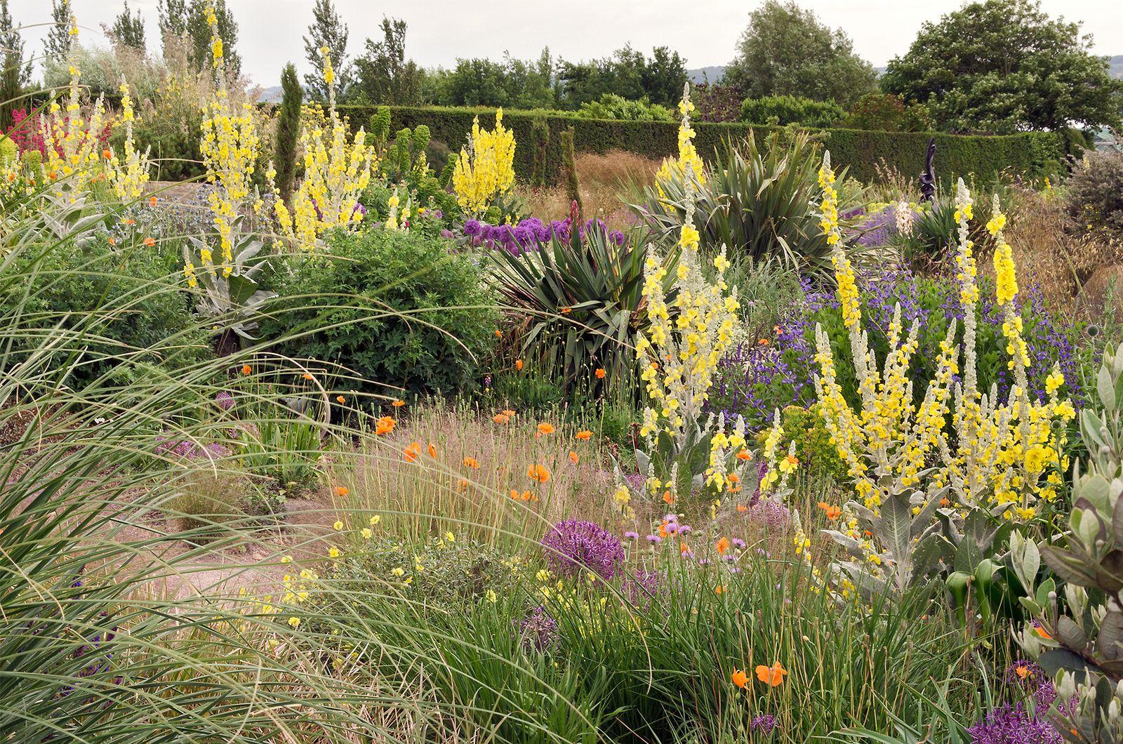 Dry Gardens In England 2 Of 21 Rhs Gardens Hyde Hall Essex Uk Dry Garden Architectural Plants Perennial Grasses