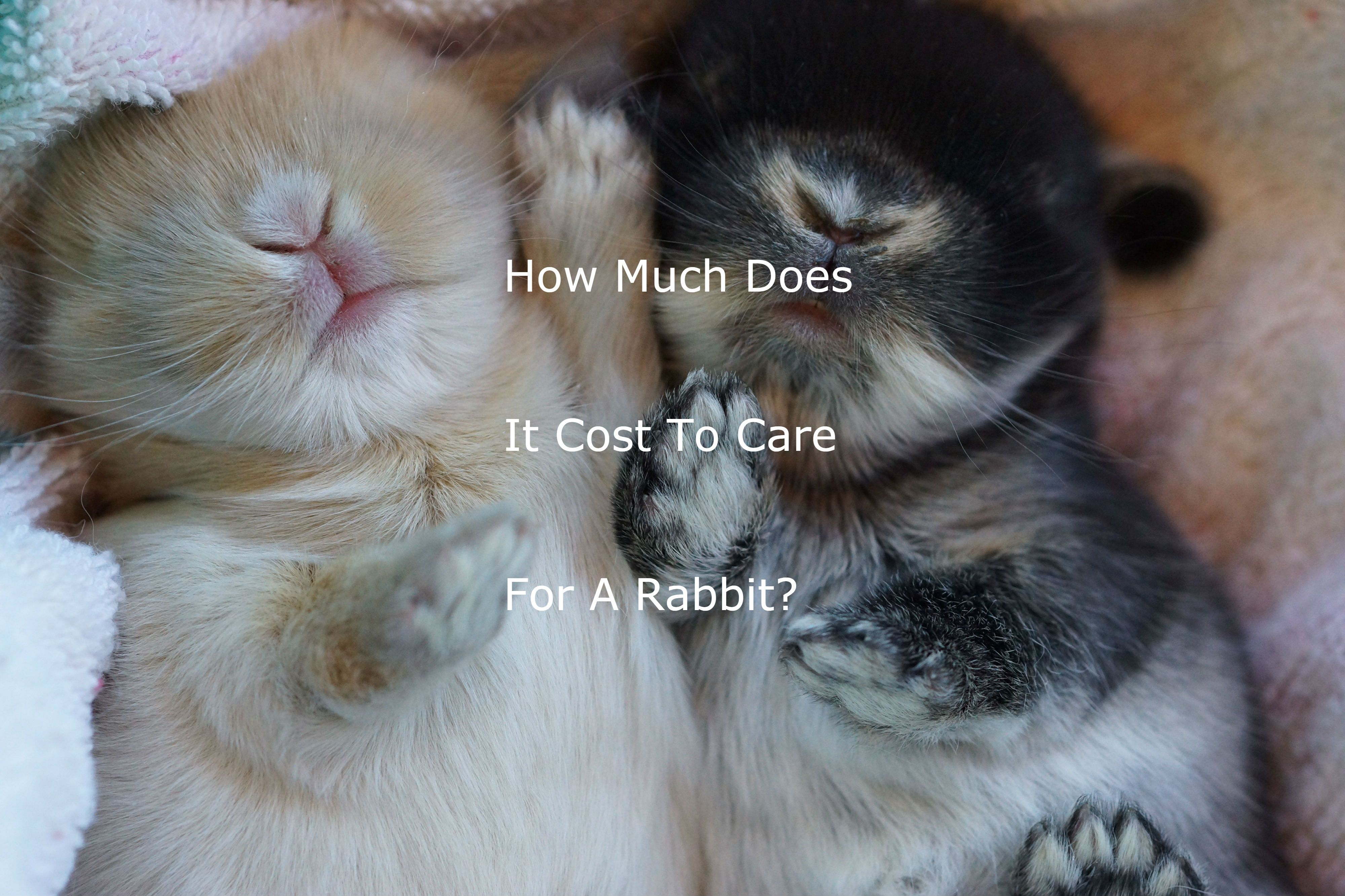 Check Out My Blog To Read Further About How Much It Costs To Raise A Rabbit They Are Very Cost Effective Pets Pets Rabbit Animals