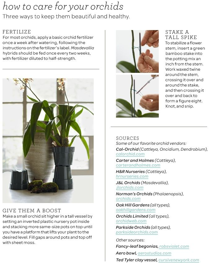 Tips On Maintaining Orchids Survival Of The Orchid Pinterest