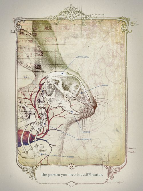 Taking the Cynical View by Teagan White | Anatomy | Pinterest ...