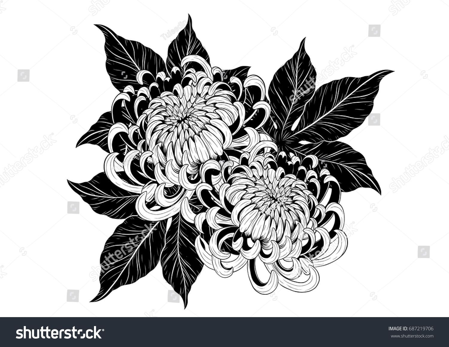 Chrysanthemum Vector On White Background Chrysanthemum Flower By Hand Drawing Flower Tattoo In 2020 Chrysanthemum Tattoo Japanese Flower Tattoo Chrysanthemum Drawing