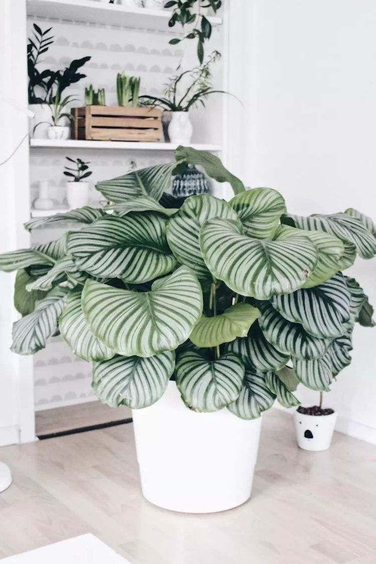 Belle piante d'appartamento con foglie colorate come una ...