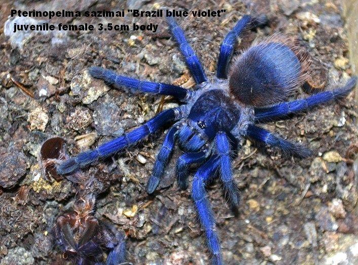 Pin on Arachnids